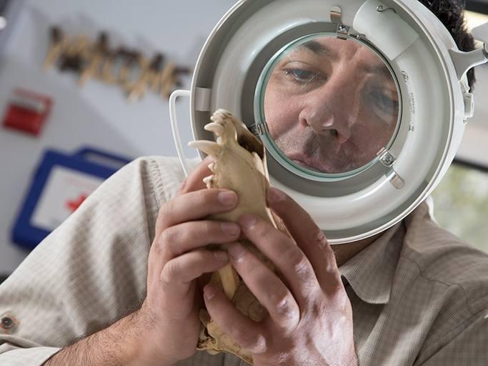 Professor studying bones under a magnifying glass.