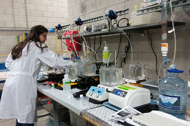A student working in a lab.