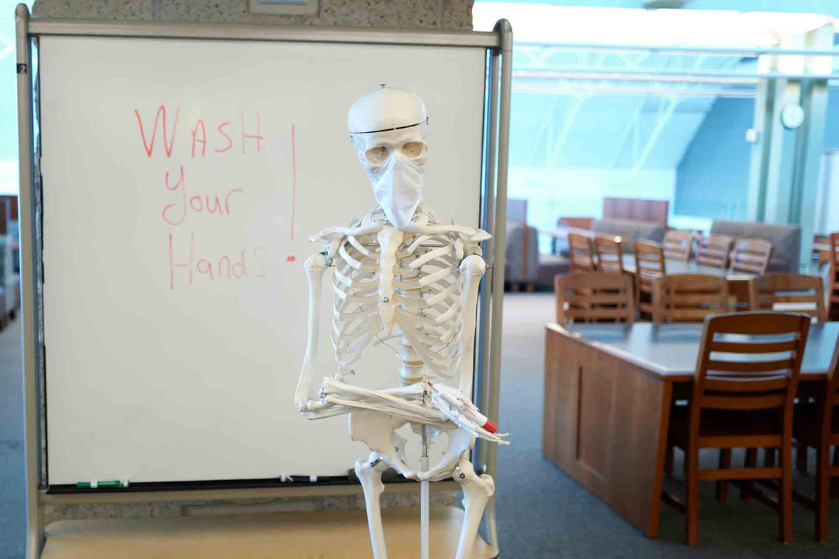 A skeleton stands in front of a whiteboard