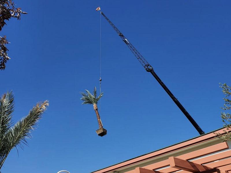 A crane holding up a palm tree.