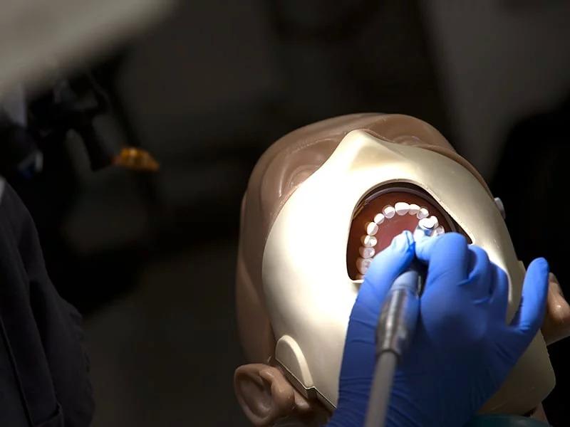 A student examining a model's teeth