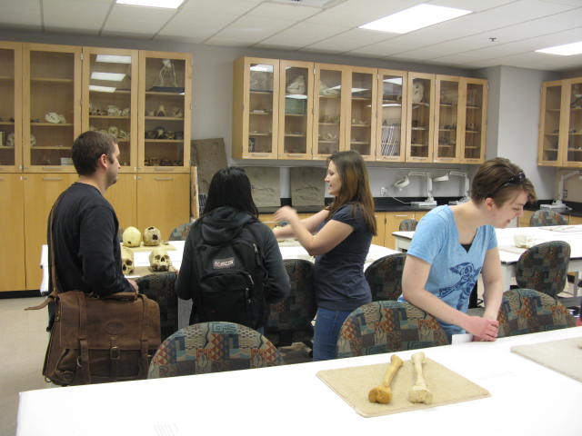 Osteology and Biological Anthropology Teaching Lab