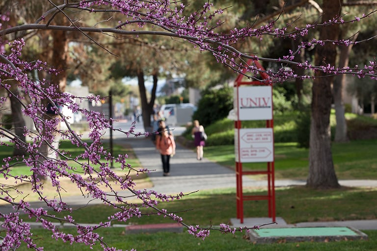 Students walking on a campus path with purple flowers in the foreground.