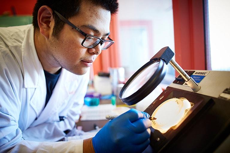Student looks through microscope