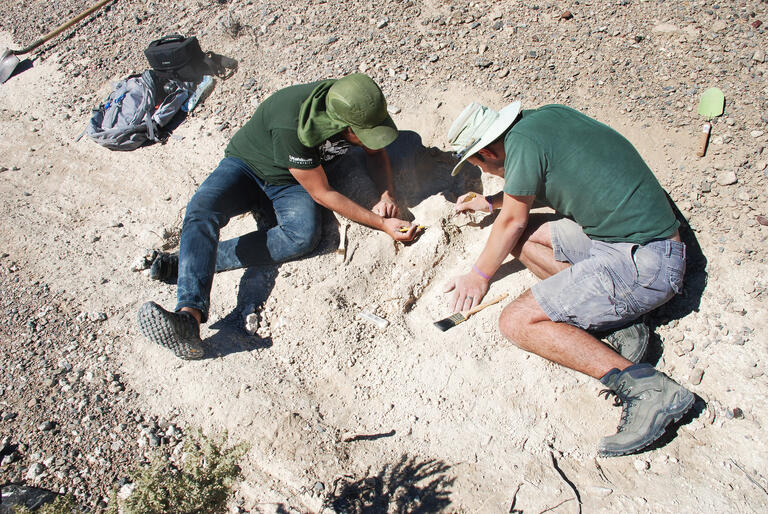 students excavate a tusk