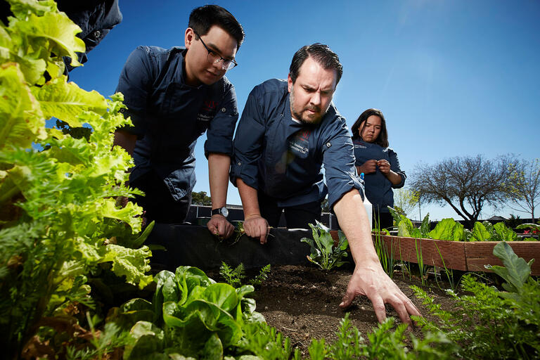 Executive Chef Mark Sandoval works with students in UNLV's community garden