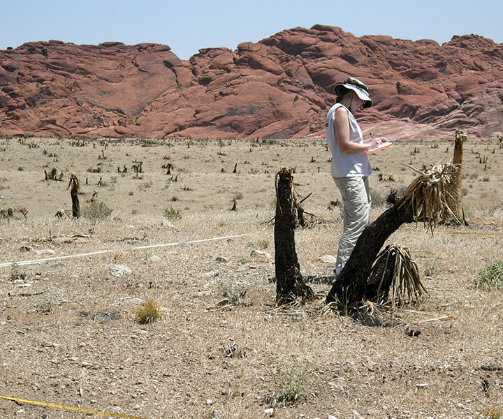 Picture of researcher in desert