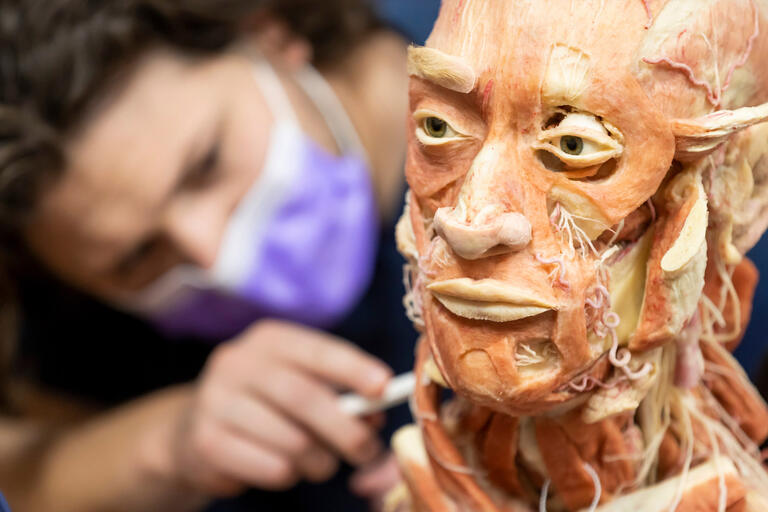 A student probes a preserved human head