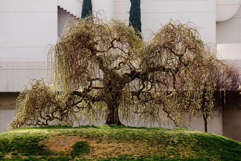 tree on hillside