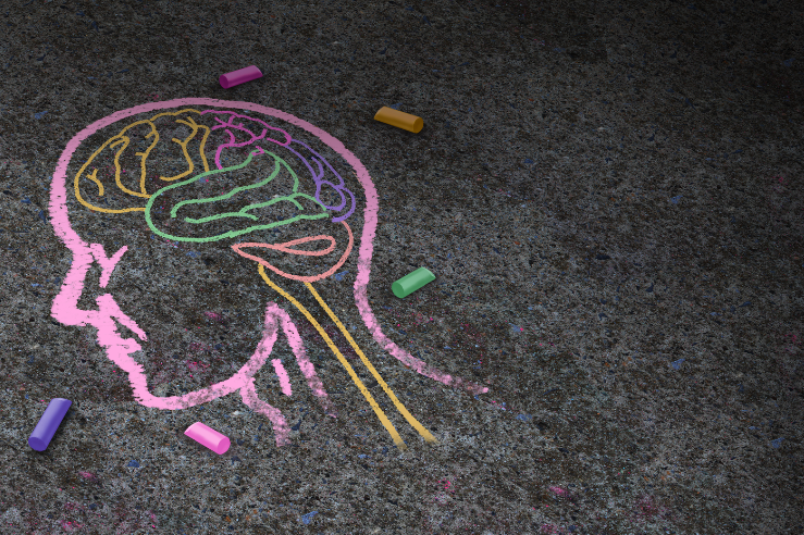 chalk drawing of human head with brain outlined