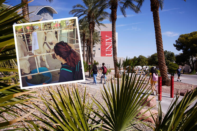 A collage of images showing an Instagram photo of a female student petting two white miniature horses as well as students walking into the Lied Library under palm trees.