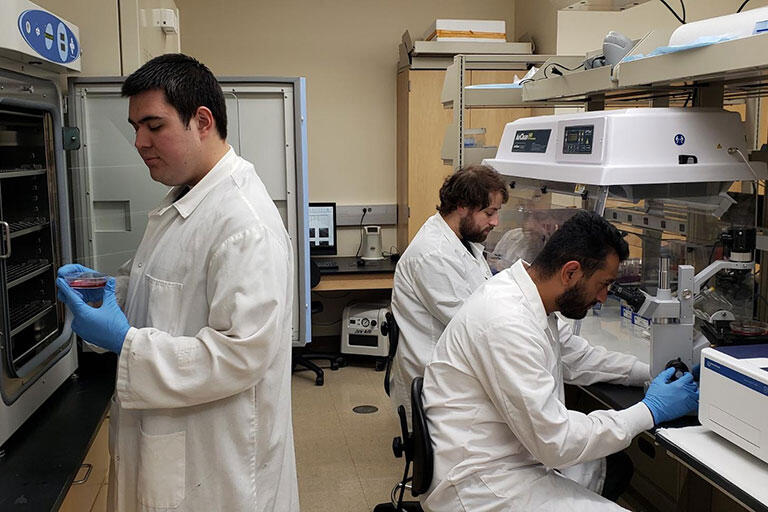 Multiple male students working in the lab