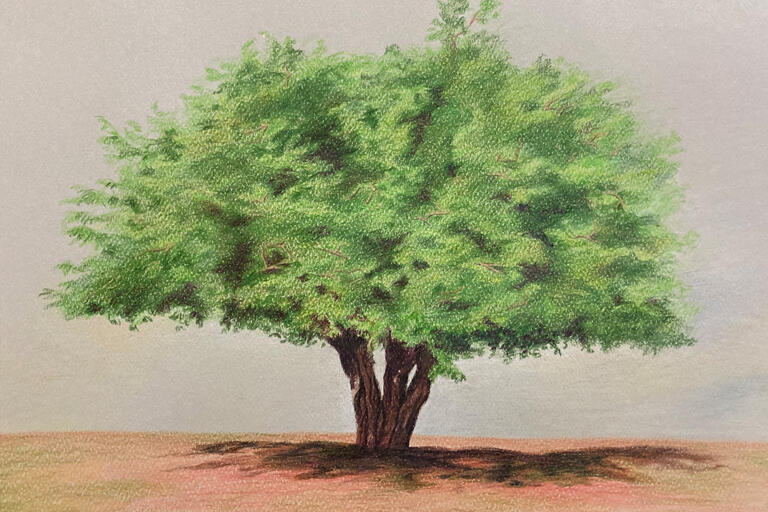 A pastel drawing of a tree