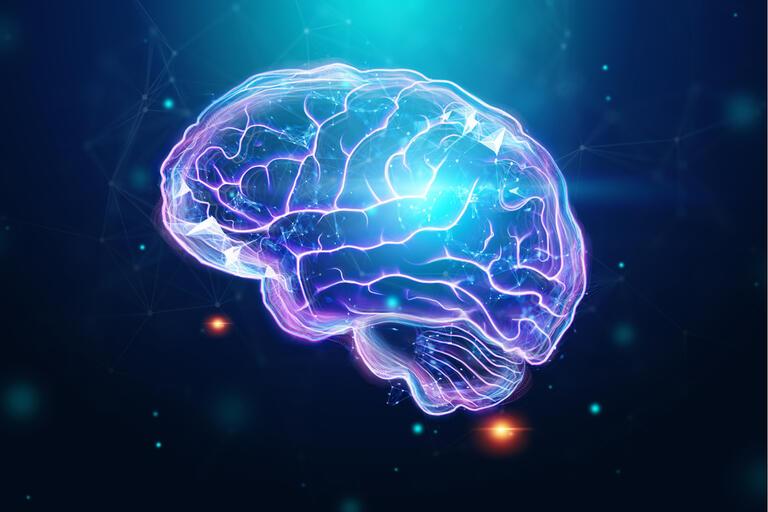artist rendering of brain
