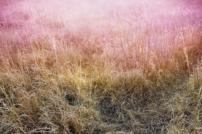 image of dry prairie grass