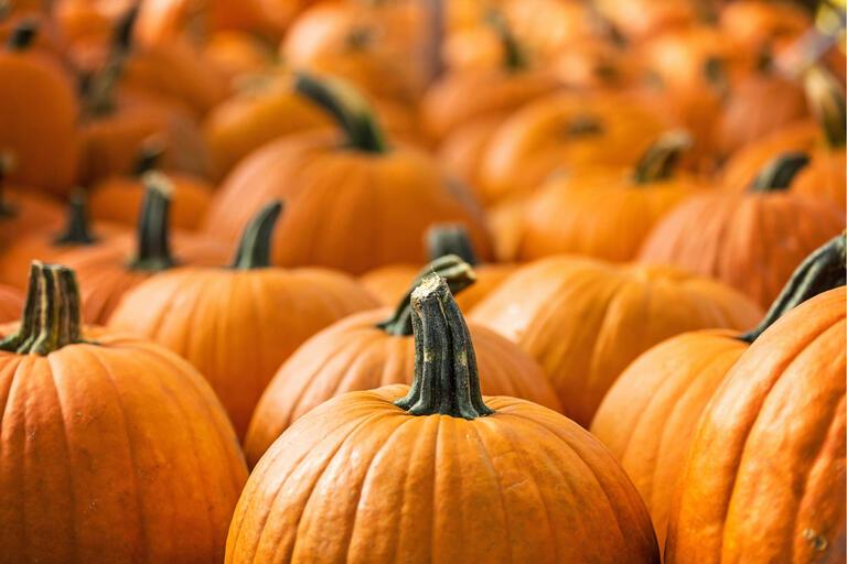 pumpkins piled together