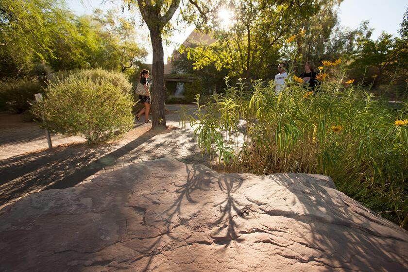 Donald H. Baepler Xeric Garden