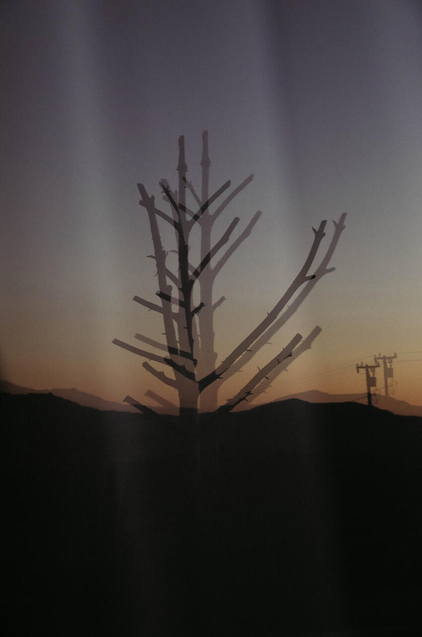 Photo of dead tree with shadows with sunset skyline in the background