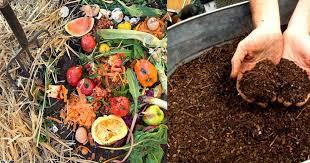 Some vegetable compost and soil.